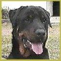 Rocky, my guard dog